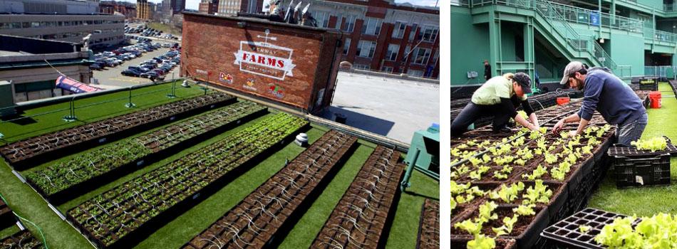 green_roof_fenway_park