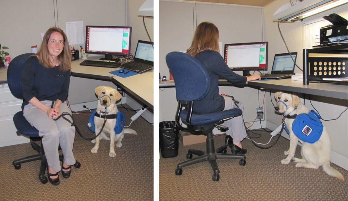 Dog Day Care Marlborough Ma