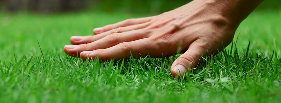 Mowing higher promotes a healthier lawn