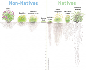 native-plants