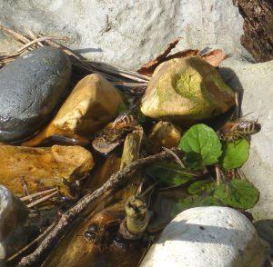 Bees on Rocks