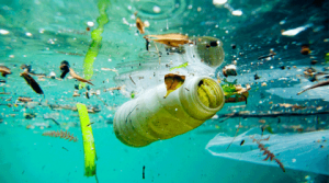 urban water pollution shows plastic and other matter in ocean
